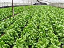 MSc / PGDip in Organic Farming from NOTS.ie