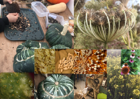 The Living Seed – Ireland's Seed Gathering from NOTS.ie