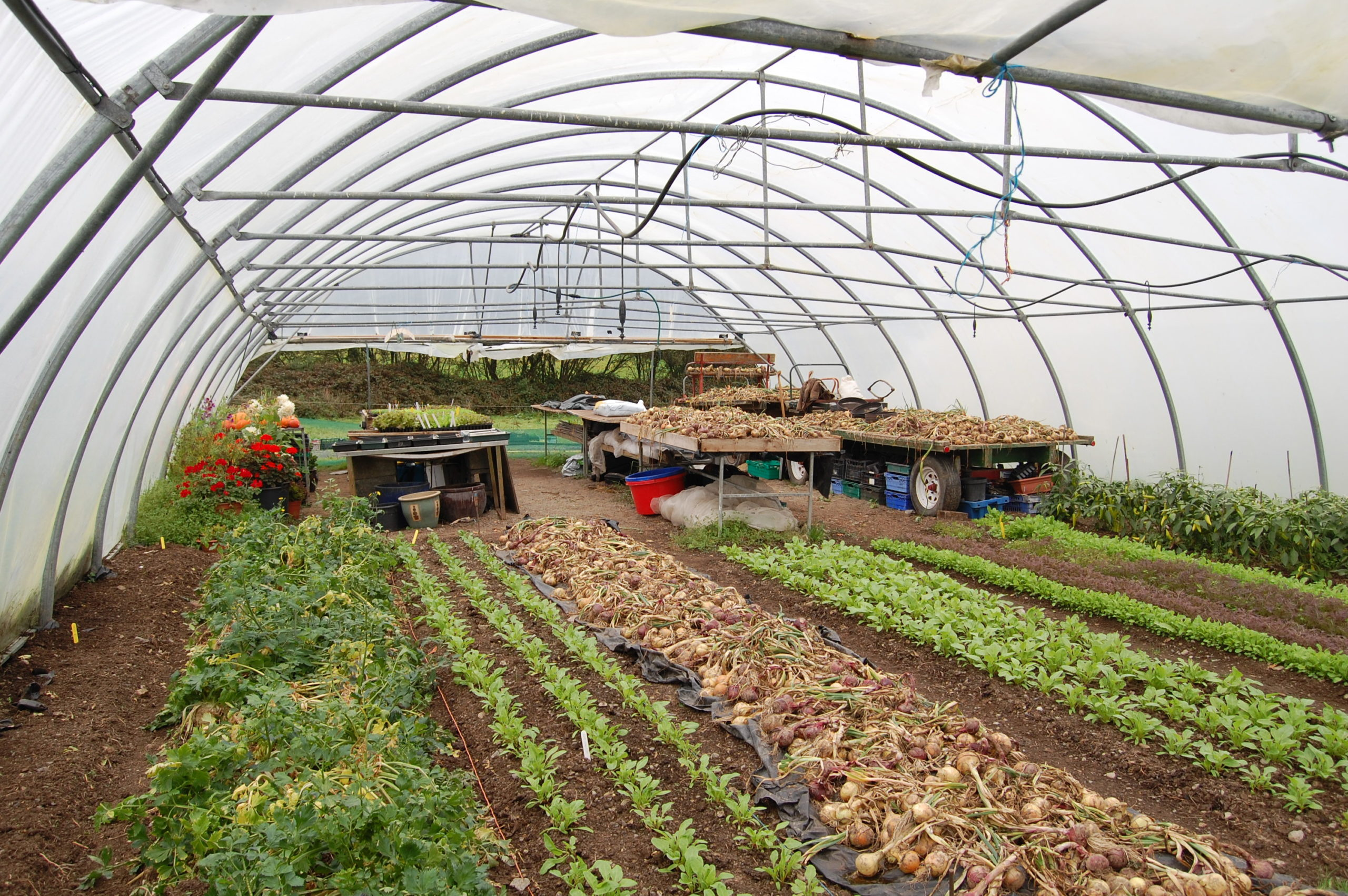 Certificate in Organic Horticulture (Distance Learning) 2020 provided by NOTS.ie