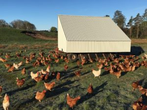 Intro to Pastured Poultry Production with Richard Perkins from NOTS.ie